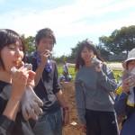 スタッフの芋掘りの事前体験(その1)