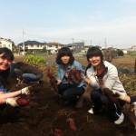 スタッフの芋掘りの事前体験(その3)