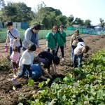 芋掘り体験企画