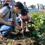 親子で芋掘り体験